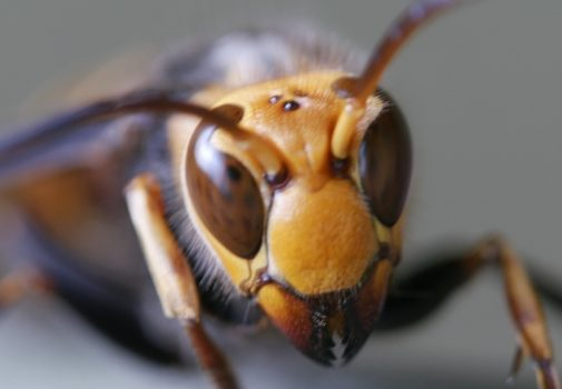 蜂の巣はスプレーで駆除できる?効果絶大な撃退方法