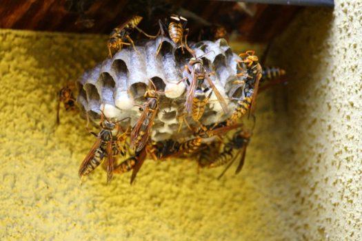 今後、蜂の巣を作らせない!駆除後は徹底的に予防を