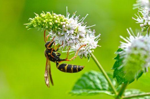 ハチが攻撃的になる時期気を付けるポイント