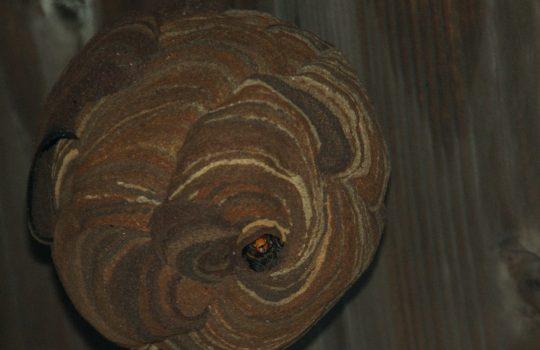 秋のハチの注意点と、被害にあったときの対象法を紹介
