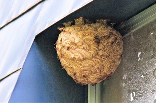 スズメバチの巣を作らせないための対策